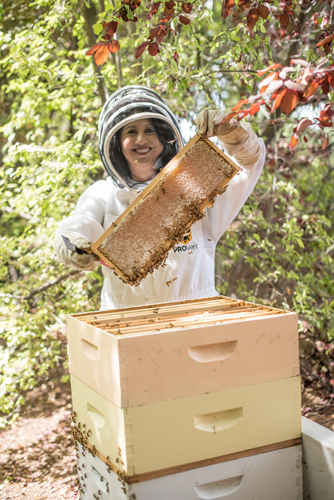 tina macuha harvesting honey