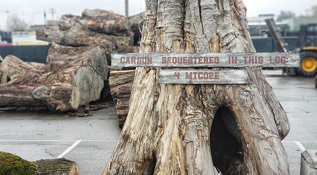 urban wood rescue trees