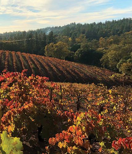 Boeger Winery