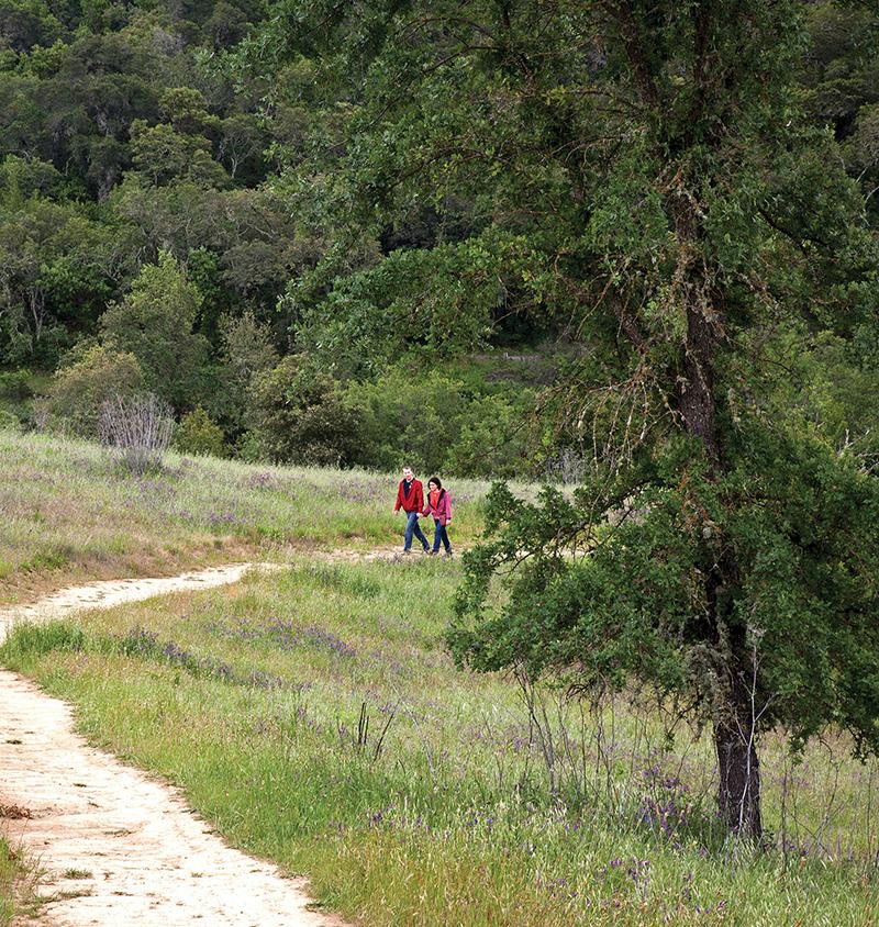 Healdsburg Ridge Open Space Preserve