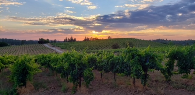 Mediterranean vineyards summer concert series