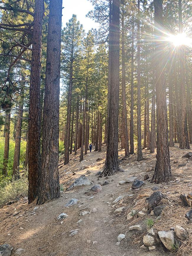 jones creek trail loop