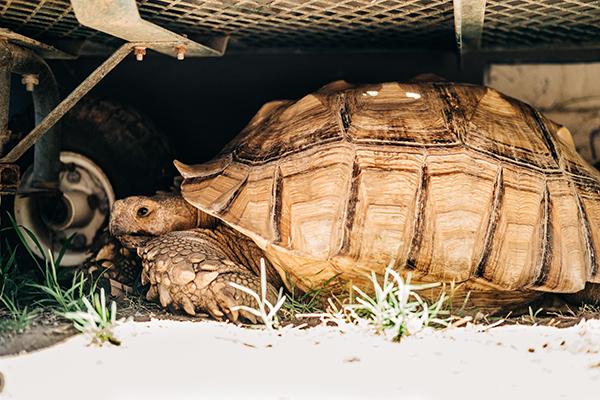 sacramento zoo turtle