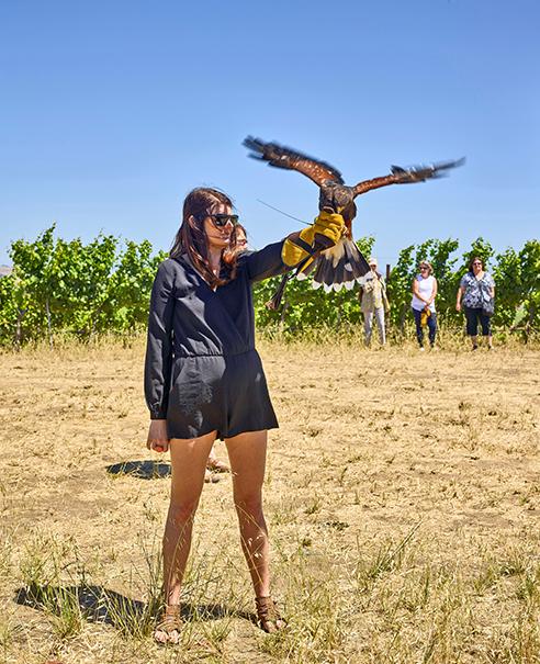 Bouchaine Vineyards falcon
