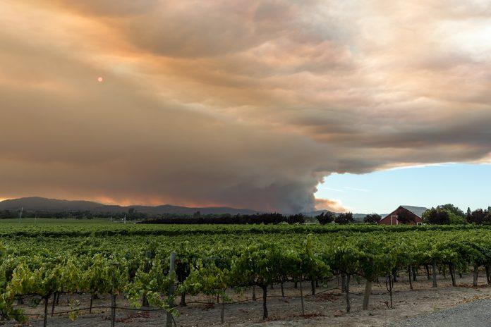 wine country and the caldor fire
