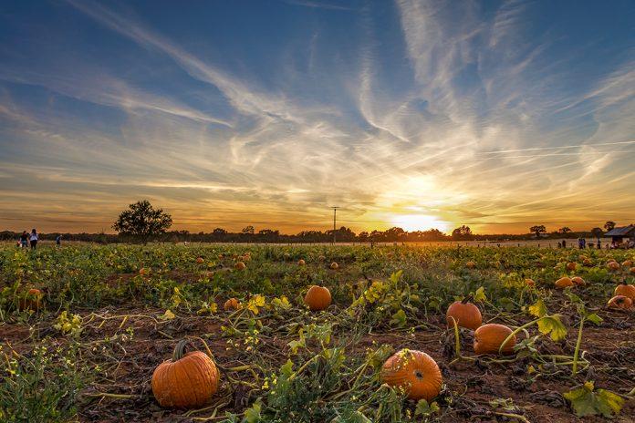 bishop's pumpkin patch